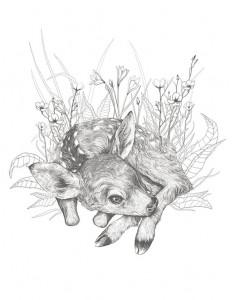 Little Fawn Illustration