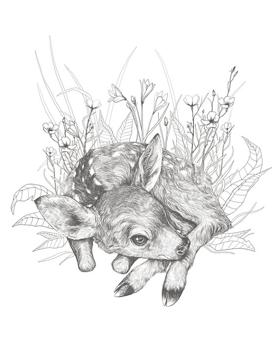 Little Fawn Illustration