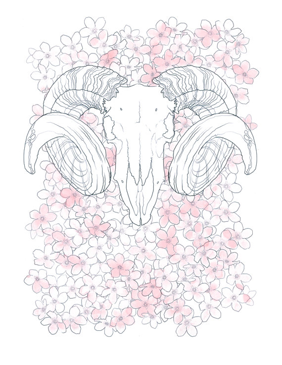 Ram Skull. Pencil and Watercolor