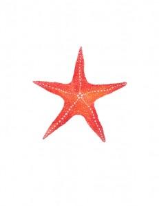 Red Starfish. Watercolor