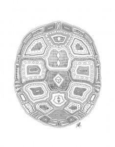 Geometric Turtle Shell