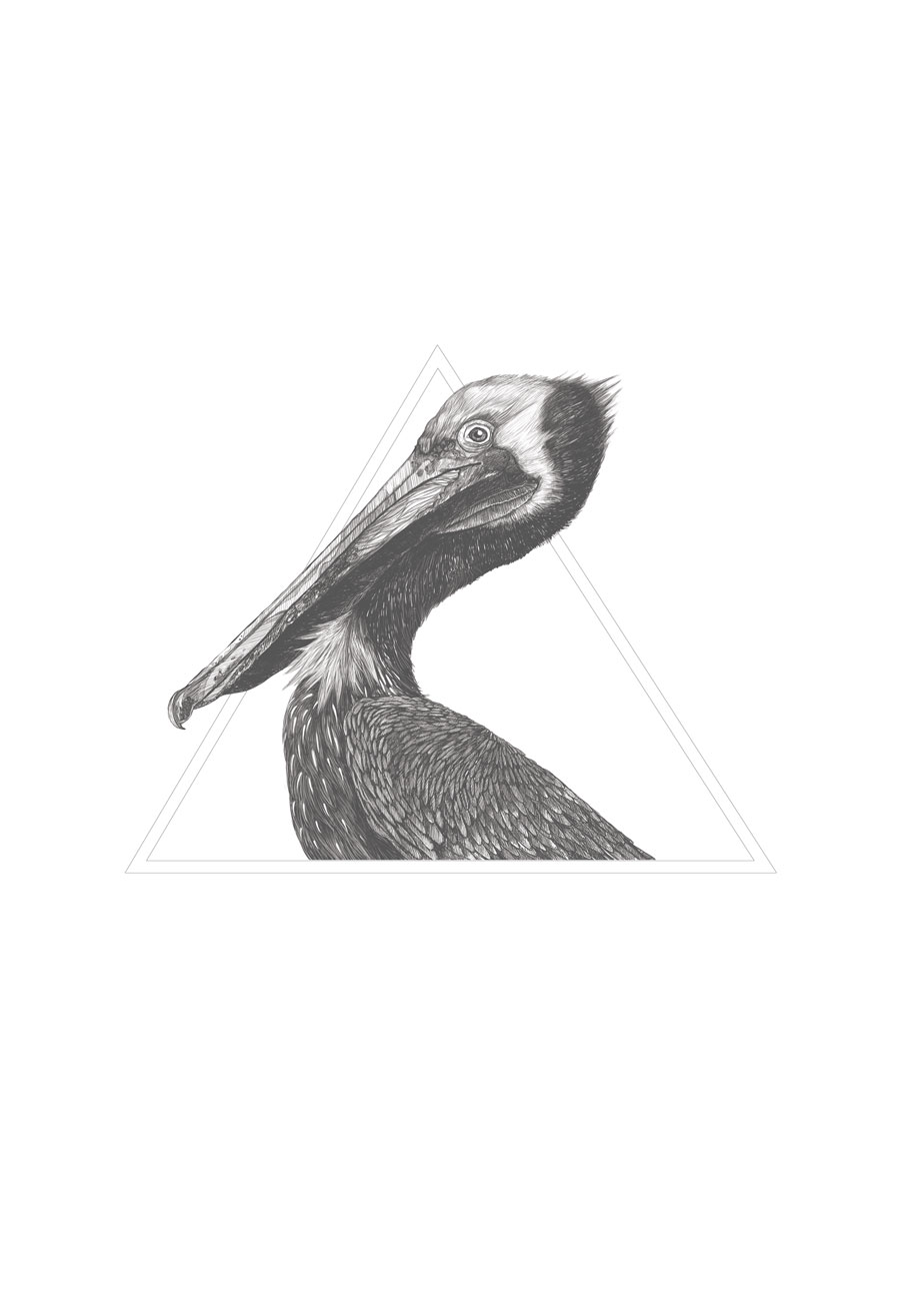 Pelican. Pen/Pencil