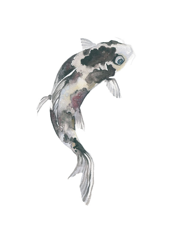 black koi watercolor by fin and feather art