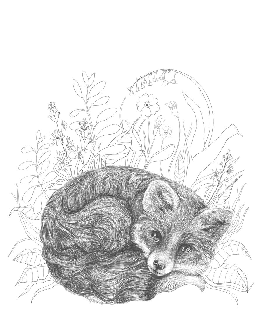 Fox. Comission