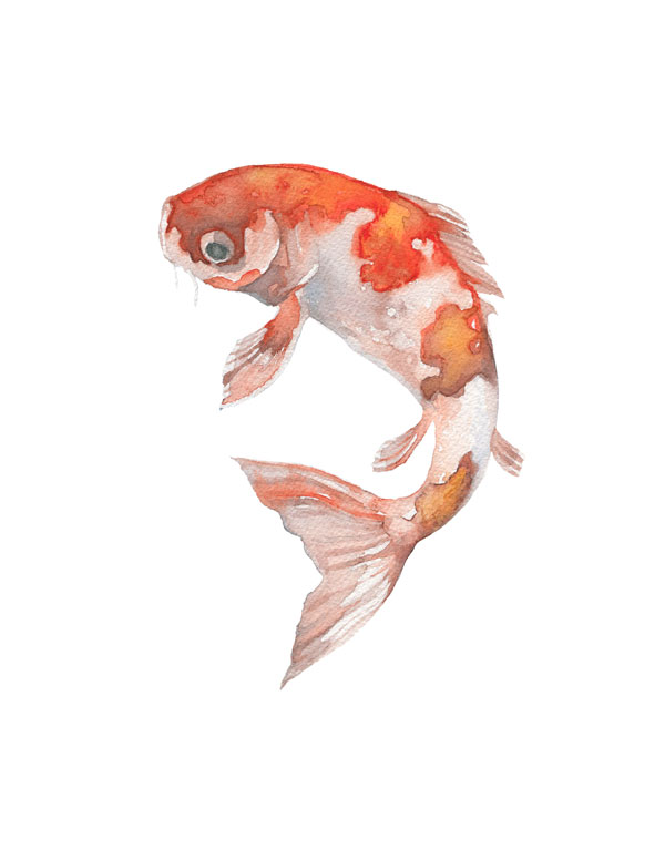 koi watercolor by fin and feather art