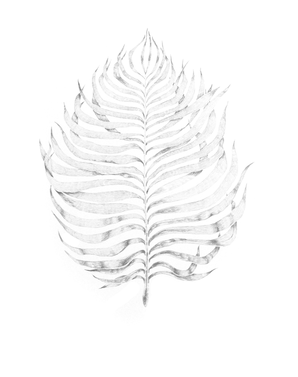 palm illustration by fin and feather art